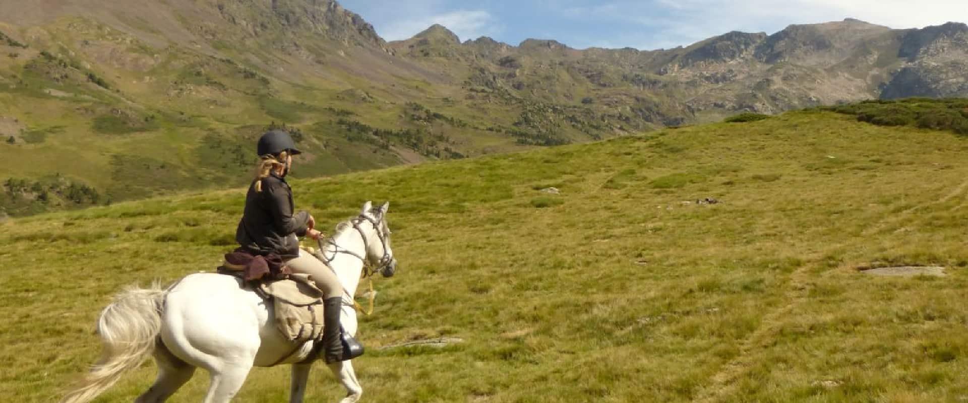 Les chevaux de la Tramontane